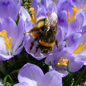 Cvetni prah - alergen