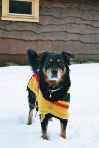 Pasja oblačila ščitijo psa pred mrazom
