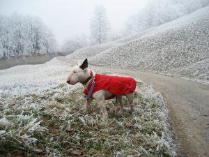 Pasji plašček za hladne zimske dni