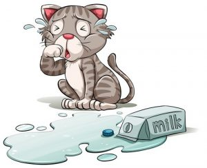 Maček - polito mleko