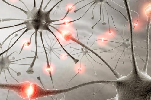 Nevroni in sinapse